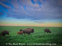buffalo water