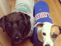 We're big Gators fans in this house
