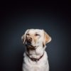 9 Books for Dog Lovers